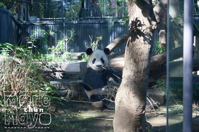 Eigenaardigheden en awesomeness - www.morethanmayo.com/eigenaardigheden-en-awesomeness | Image: Panda in Tokyo, copyright: More than Mayo