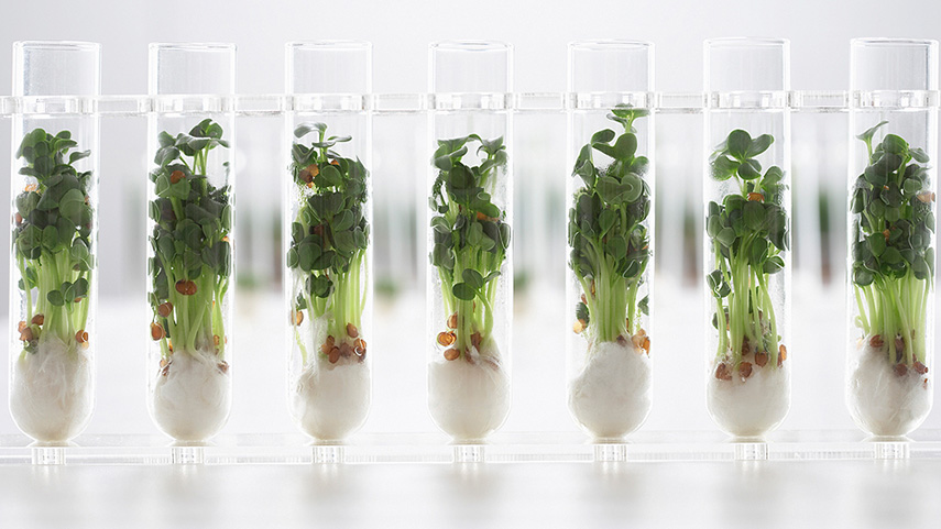 What's cooking: foodtrends 2017 and beyond - www.morethanmayo.com/foodtrends-2017 | image: the loop future of food by Li Edelkoort, source: exploreveryday.wordpress.com