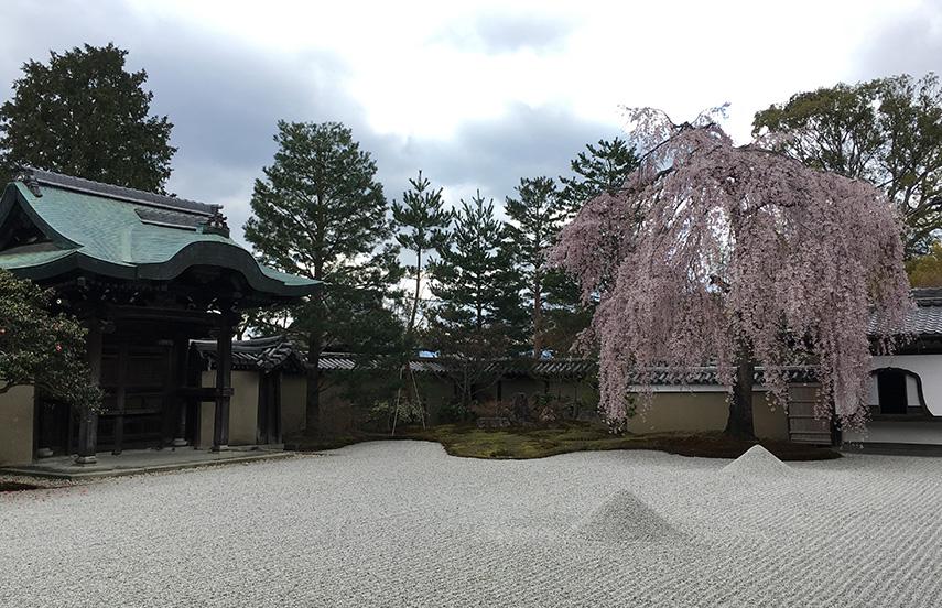 Taste the world: sakura seizoen in Japan - www.morethanmayo.com/sakura-japan | image: Sakura in full bloom, copyright: More than Mayo