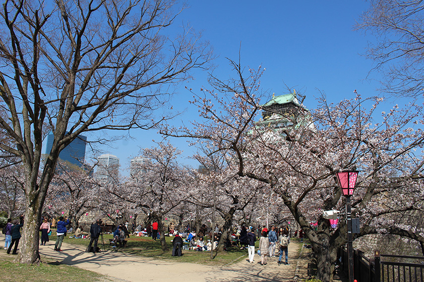 Taste the world: sakura seizoen in Japan - www.morethanmayo.com/sakura-japan | image: Sakura hanami, copyright: More than Mayo
