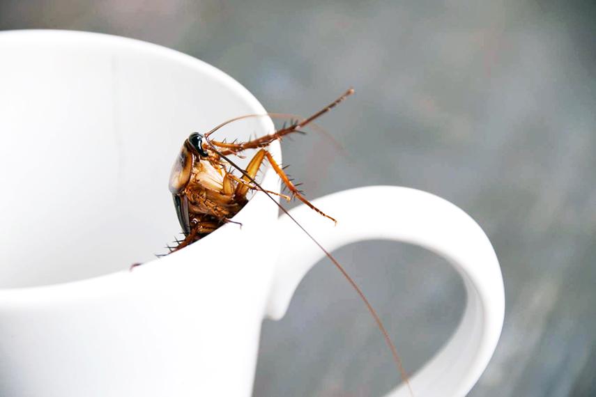 Future food: insecten - www.morethanmayo.com/future-food-insecten | image: insect milk, source: thisismold.com